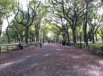 Tree-lined Central Park Promenade