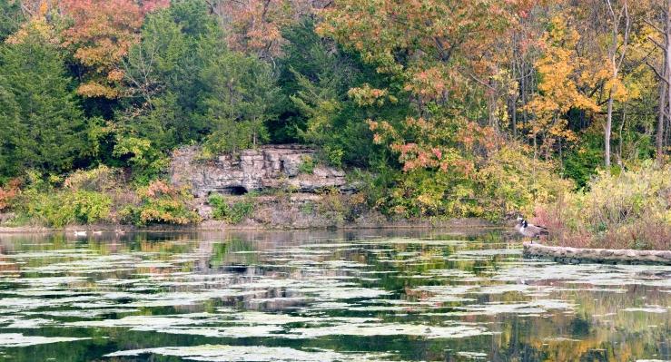 Ducks on a park lake