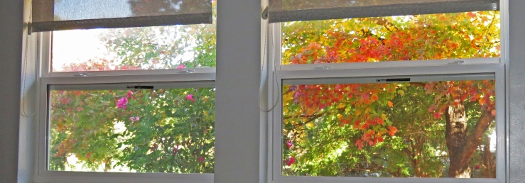 Autumn view through window